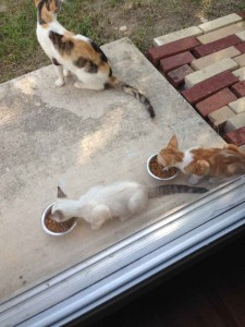 mama-cat-babies